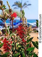 Selective focus on flowers near mediterranean beach. Lloret...