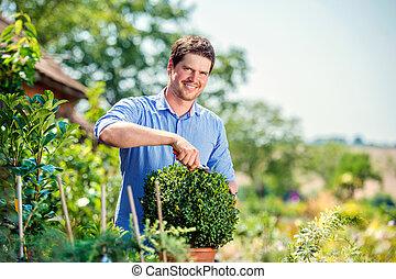 Handsome gardener pruning little boxwood bush, green sunny...