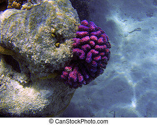 Bright colors  coral reef close up underwater photography.
