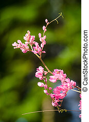 pink flower and green background is beautiful and have...