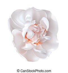 Realistic daffodil flower