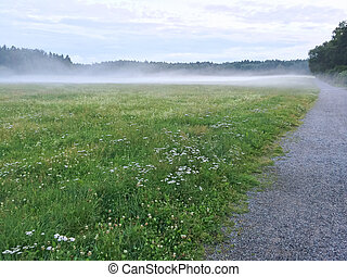 Misty green meadow with blooming wild flowers