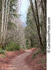 Trail through Pacific Northwest Forest