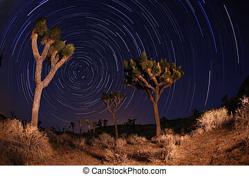 Night Shot of Star Trails in Joshua Tree National Park in...