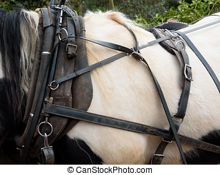 Horse Harness - Close up view of a horse collar and harness