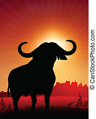 bull on sunset background with skyline