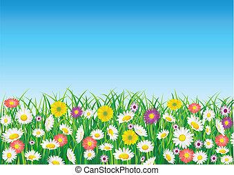virág, mező