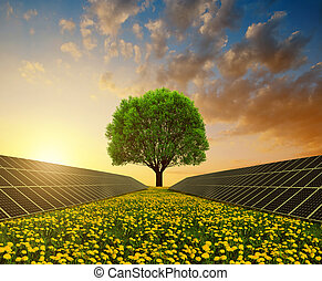 Solar energy panels with tree against sunset skyClean energy...