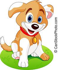 CÙte, Filhote cachorro, sentando, prado