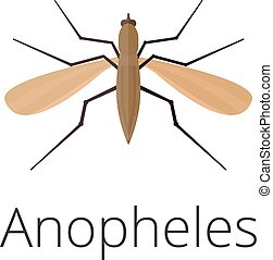 Anopheles mosquito drawing - photo#18