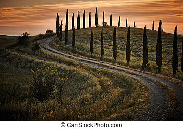 Cypress trees on the road to a farmhouse in the Tuscany