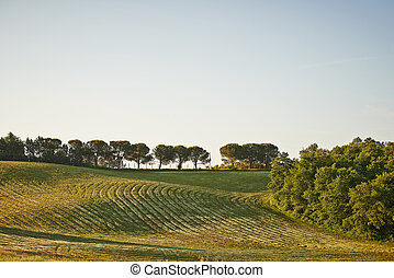 Wavy fields in Tuscany at sunrise