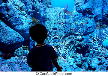 Child in sea aquarium - Child looking at the fish inside the...