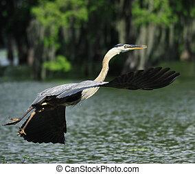 Big Birds Everglades NP
