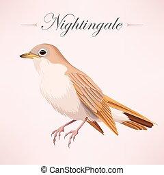 Vintage beautiful nightingale - Vector illustration of...