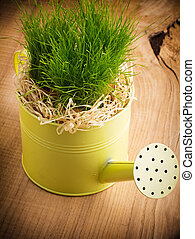 Watering can. - Watering can planted green grass.