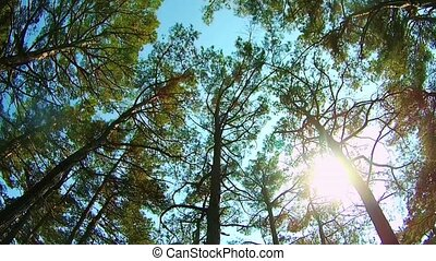 mountain forest - Video 1920x1080 - Panoramic view of the...