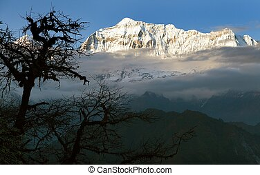 Evening view of Gurja Himal with silhouette of tree -...