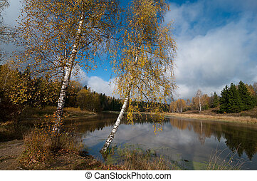 Two birches near the pond