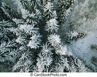 Winter evergreen forest from above