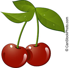 Cherry. Vector illustration, over white. EPS 8, AI. JPEG