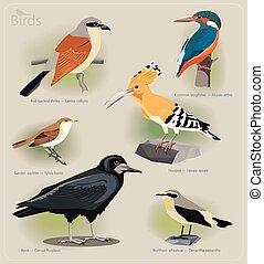 Image set of birds: red-backed shrike, common kingfisher,...