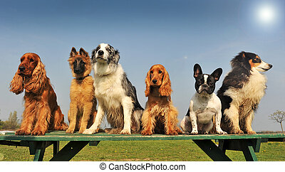 little dogs - five purebred big dog sitting in a day of...