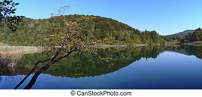 Pltivice lake - Forrest in the lake