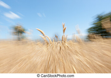 Nature abstract zoom blur - Nature zoom blur abstract Boggy...