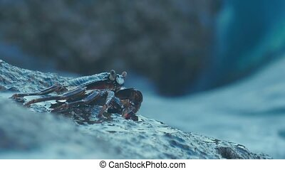 Crab on the rock at the beach - Crab on the rock, rolling...