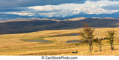 panorama of chilean pampas - gorgeous panorama view of...