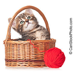 Cute little kitten - Cute kitten in a wicker basket with red...