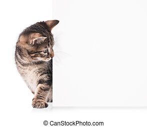Cute little kitten with blank billboard on white background
