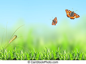 Green grass, caterpillar and butterfly on nature blurred...