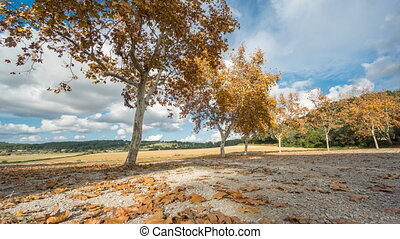 Autumn and trees - Ultra wide angle time lapse of autumn and...