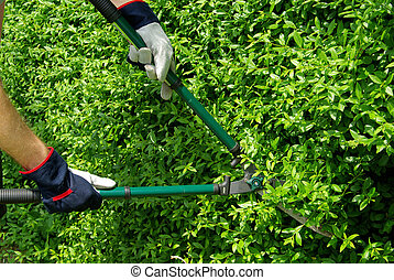 cut a hedge 09