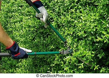 cut a hedge 09