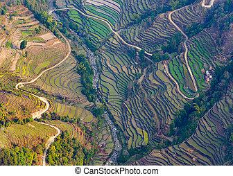 フィールド,  Pokhara, 航空写真, 水田, 光景