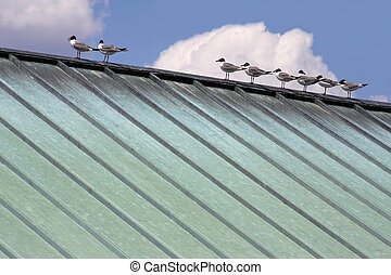 birds on copper roof - birds standing on oxidized copper...