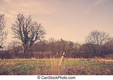 Field with an old fence post