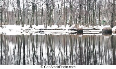 winter trees reflected in water