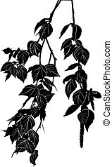 birch tree branch