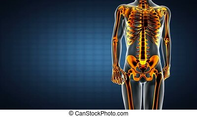 loop human bones radiographic scan medical footage
