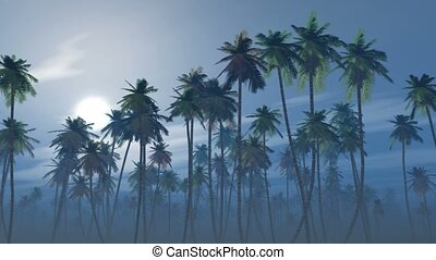 Mysterious foggy palm forest in a full moon night