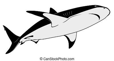 requin, tatouage