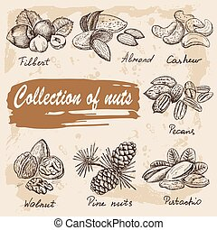 collection of nuts