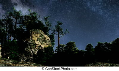 4K TIme Lapse of Stars and Silhouetted Pine Trees