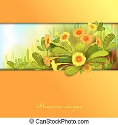 Orange yellow primroses - Spring summer flowers. Yellow...