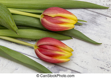Tulips - Showing some tulips laying on a wooden top