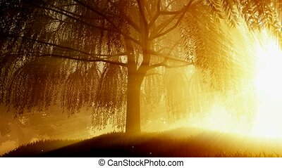 beautiful morning with sunrays shining through the trees